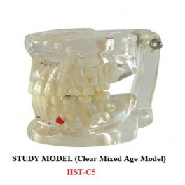 http://dentalmart.in/1386-thickbox_default/study-model-clear-mixed-age-model-.jpg
